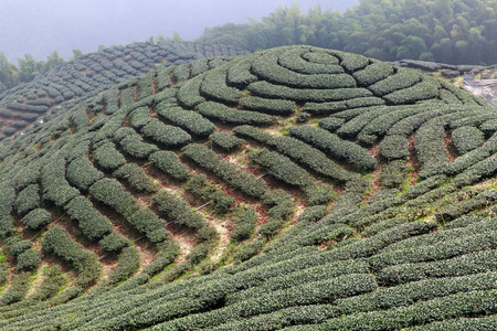 trigram: The shape of tea garden like chinese Eight Trigrams in Nantou Stock Photo