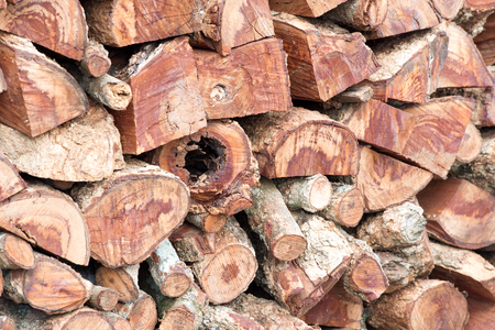 tree disc: Wall of wood logs. Background