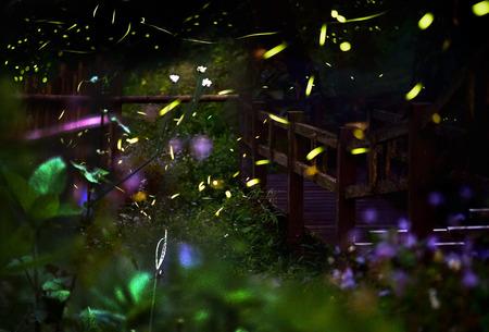 ホタルホタルの森の夜。ホタルの長時間露光。 写真素材