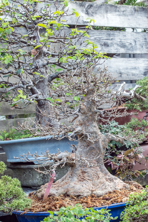 shrunken: Withered Tree