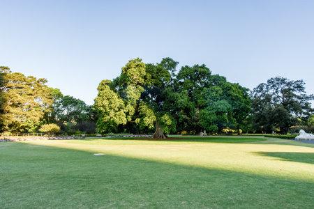 シドニー - 10 月 12 日: 2017 年 10 月 12 日、オーストラリアのシドニーでシドニー王立植物園。