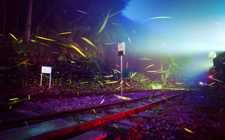 Firefly flying on the railway. Fireflies in the colorful background at night scene in summer. Long exposure photo.