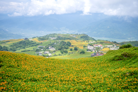 The daylily hillside at Lioushihdan mountain(Sixty Rock Mountain), Hualien East Rift Valley of Taiwan