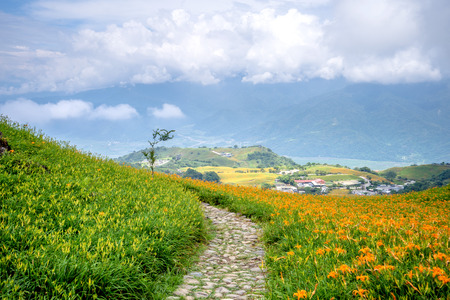 The daylily hillside at Lioushihdan mountain(Sixty Rock Mountain), Hualien East Rift Valley of Taiwan Stock Photo - 106730447