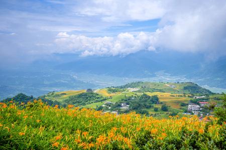 The Orange daylily(Tawny daylily) flower farm at Sixty Rock Mountain(Liushidanmountain) with blue sky and cloud, Fuli, Hualien, Taiwan Foto de archivo