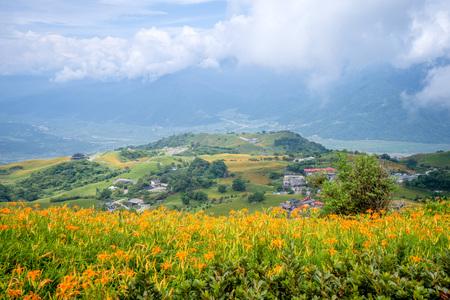 The Orange daylily(Tawny daylily) flower farm at Sixty Rock Mountain(Liushidan mountain) with blue sky and cloud, Fuli, Hualien, Taiwan
