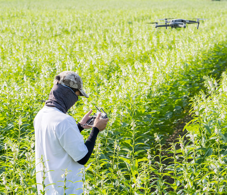A young technician farmer is using remote control navigating drone tracing the farm to monitor the growth of sesame crops in the morning, Technology 4.0 concept Stock Photo - 112193333