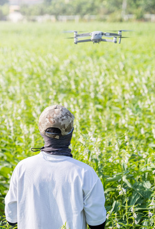 A young technician farmer is using remote control navigating drone tracing the farm to monitor the growth of sesame crops in the morning, Technology 4.0 concept