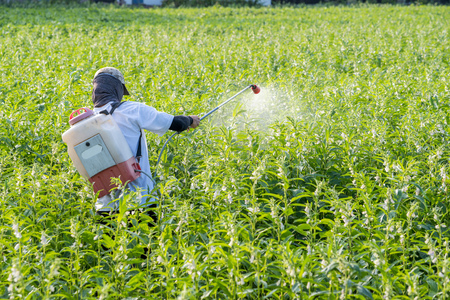 A young man farmer master is spraying pesticides (farm chemicals) on his own sesame field to prevent pests and plant diseases in the morning, close up, Xigang, Tainan, Taiwan Standard-Bild - 111756680