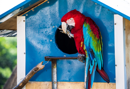 red-and-green macaws playing in the zoo Stock Photo