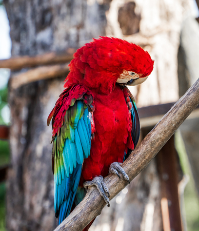 red-and-green macaws playing in the zoo 스톡 콘텐츠