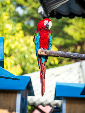 red-and-green macaws playing in the zoo 写真素材