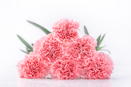 Top view of elegance blooming sweet pink color tender carnations isolated on bright white background with card, may mothers day mum greeting design concept, close up, copy space