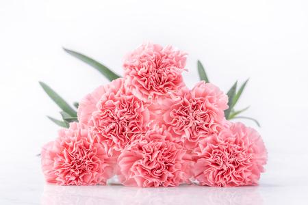 Widok z góry elegancji kwitnący słodki różowy kolor goździków przetargowych na białym tle na jasnym białym tle z kartą, może dzień matki mama pozdrowienie koncepcja projektu, zbliżenie, kopia przestrzeń