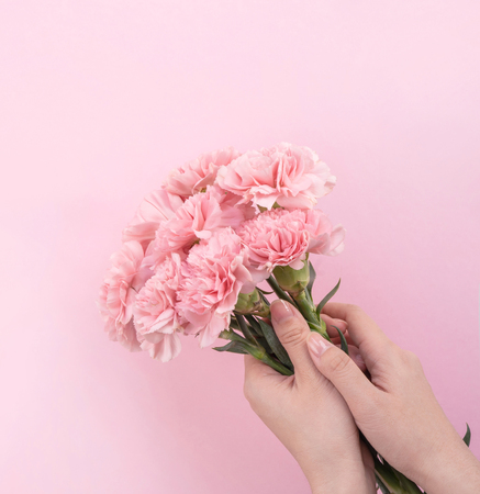 Woman giving bunch of elegance blooming baby pink color tender carnations isolated on pale pink background, mothers day decor design concept, top view, close up, copy space