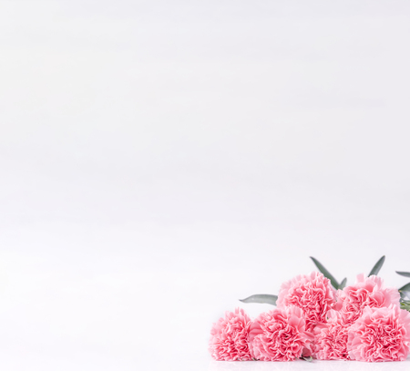 Mothers day concept design. Beautiful fresh blooming baby pink color carnations isolated on bright white background.