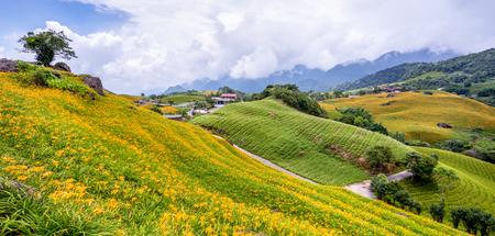 Beautiful orange daylily flower farm on Sixty Rock Mountain (Liushidan mountain) with blue sky and cloud, Fuli, Hualien, Taiwan, close up, copy space