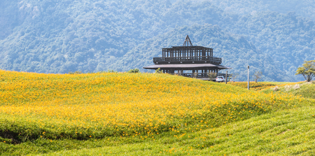 Beautiful orange daylily flower farm on Sixty Rock Mountain (Liushidan mountain) with blue sky and cloud, Fuli, Hualien, Taiwan, close up, copy space Stock Photo