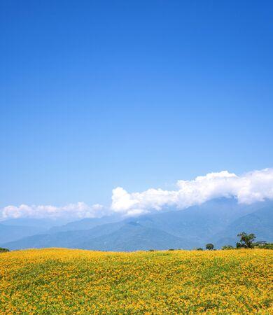 Beautiful orange daylily flower farm on Liushidan mountain (Sixty Rock Mountain) with blue sky and cloud in Taiwan Hualien Fuli.