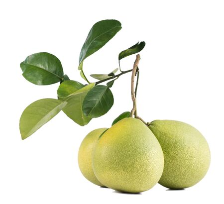 Fresh pomelo, pummelo, grapefruit, shaddock isolated on white background, close up, cut out, clipping path. Fruit for Mid-autumn festival. Foto de archivo