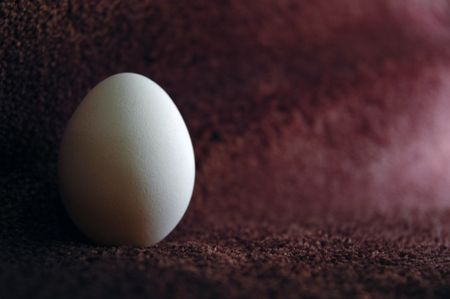 wooly: white egg on the brown wooly cover Stock Photo