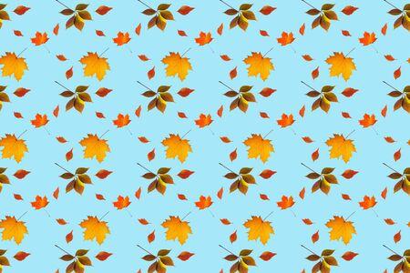 Autumn leaves seamless pattern on blue background Stok Fotoğraf