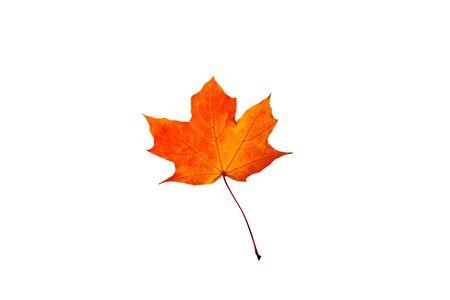 Red orange maple leaf isolated on white