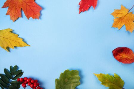 Frame from autumn leaves on blue background, space for text