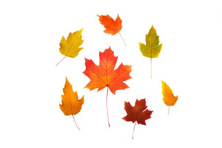 Set of maple leaves of different colors