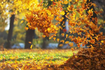 Defocused sunny autumn park background with falling autumn leaves