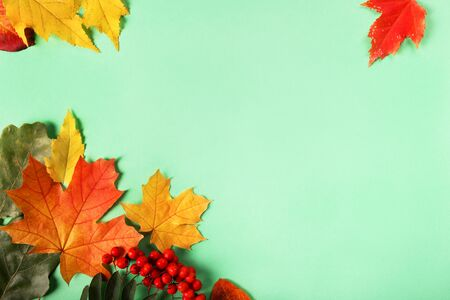 Frame from autumn leaves on blue background, place for text Stok Fotoğraf