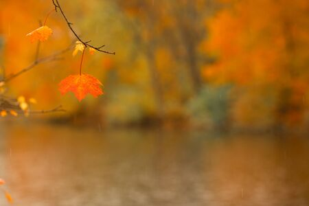 Maple leafe on defocused autumn park background, river embankment