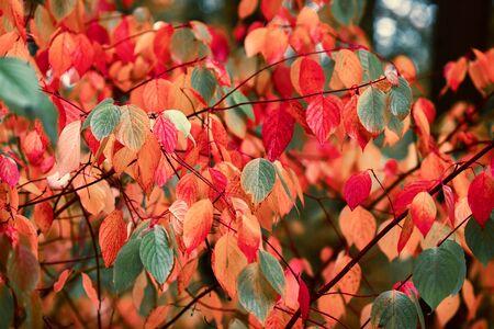 Bright colorful vivid lush autumn leaves , autumn wallpaper Stok Fotoğraf