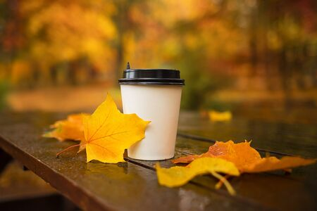 Coffee paper cup with lid with maple leaves on wet wooden table outdoors