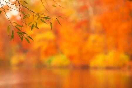 Defocused autumn park lake background, watercolor effect