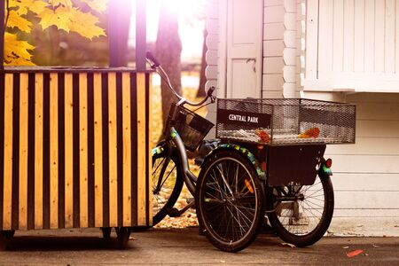 Bike trolley in autumn park with maple foliage