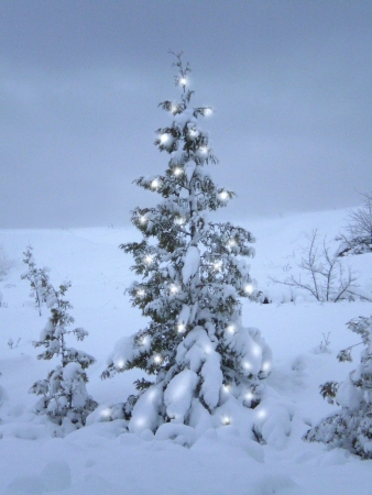 A snow covered Christmas tree with lights.