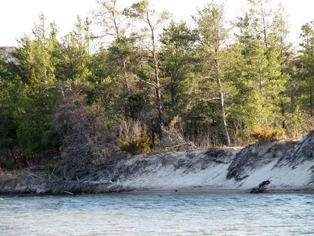 �Sunlit trees along the sandy beach of a slow moving rivers edge.