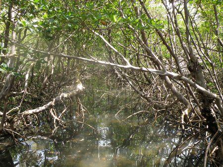 Sun light penetrates a deep swamp in southern Florida. Stock Photo