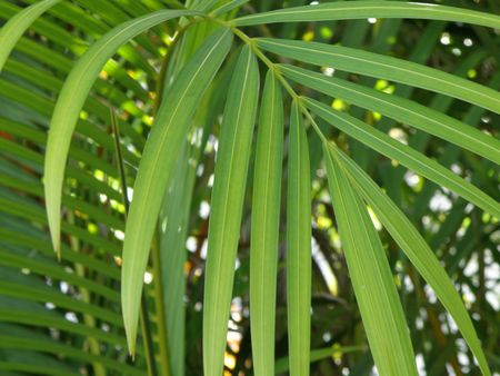 Palm tree leaves. Stock Photo