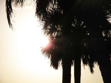 Sun flares from the edge of a grove of Palm trees. Stock Photo