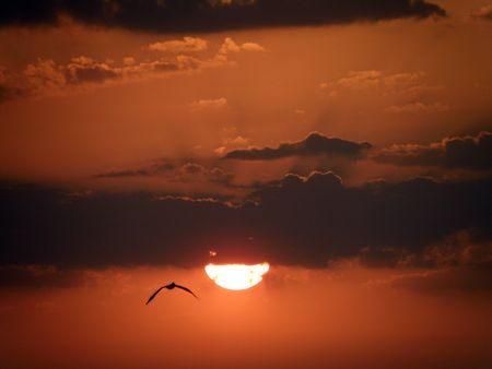 A Pelican flies away from a beautiful red and orange sunset. photo