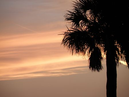 A beautiful sun sets behind a Florida Palm tree. Stock Photo