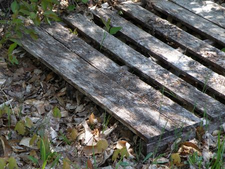 An old wood pallet lays partially buried in leaves and dirt. The boards have been faded with age.