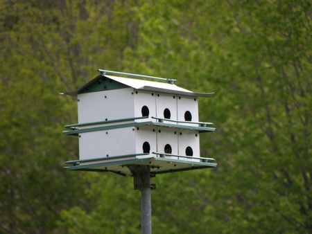 Green and White two story bird house in front of a bright green forest.