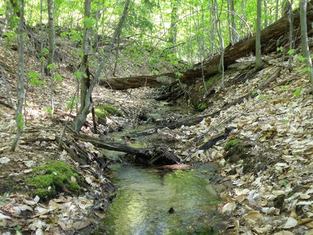 Fresh water spring flows from a high ridge. Water pours over obstacles moving toward the bottom.