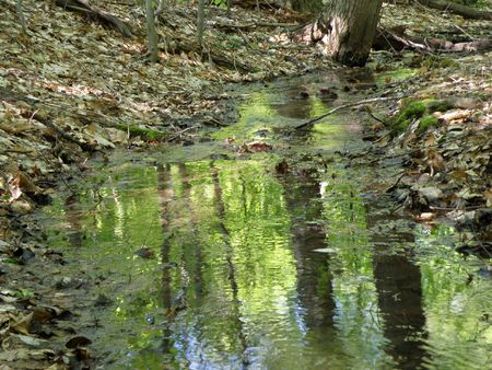 crick: Fresh water spring flows from a high ridge. Water pours over obstacles moving toward the bottom. Bright green reflections from the leaves on the water surface.