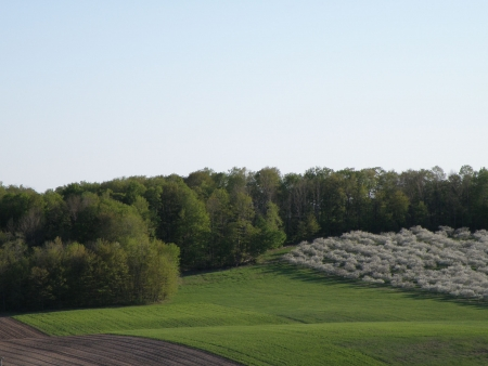 An orchard of sour cherry trees next to a plush green hay field. Rolling hills and a freshly plowed field backed by a deep green forest. Stock Photo - 4886186