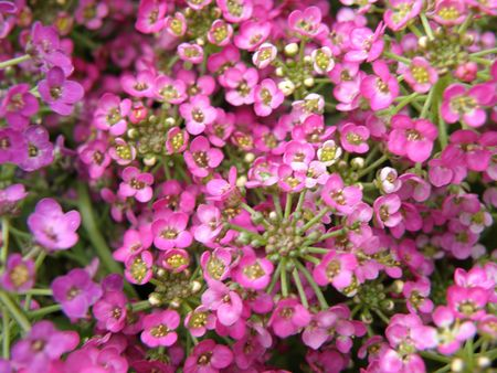 Small pink flowers.