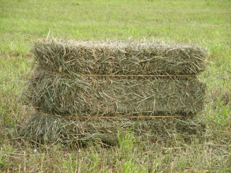 Hay bale sets on a field.   Stock Photo